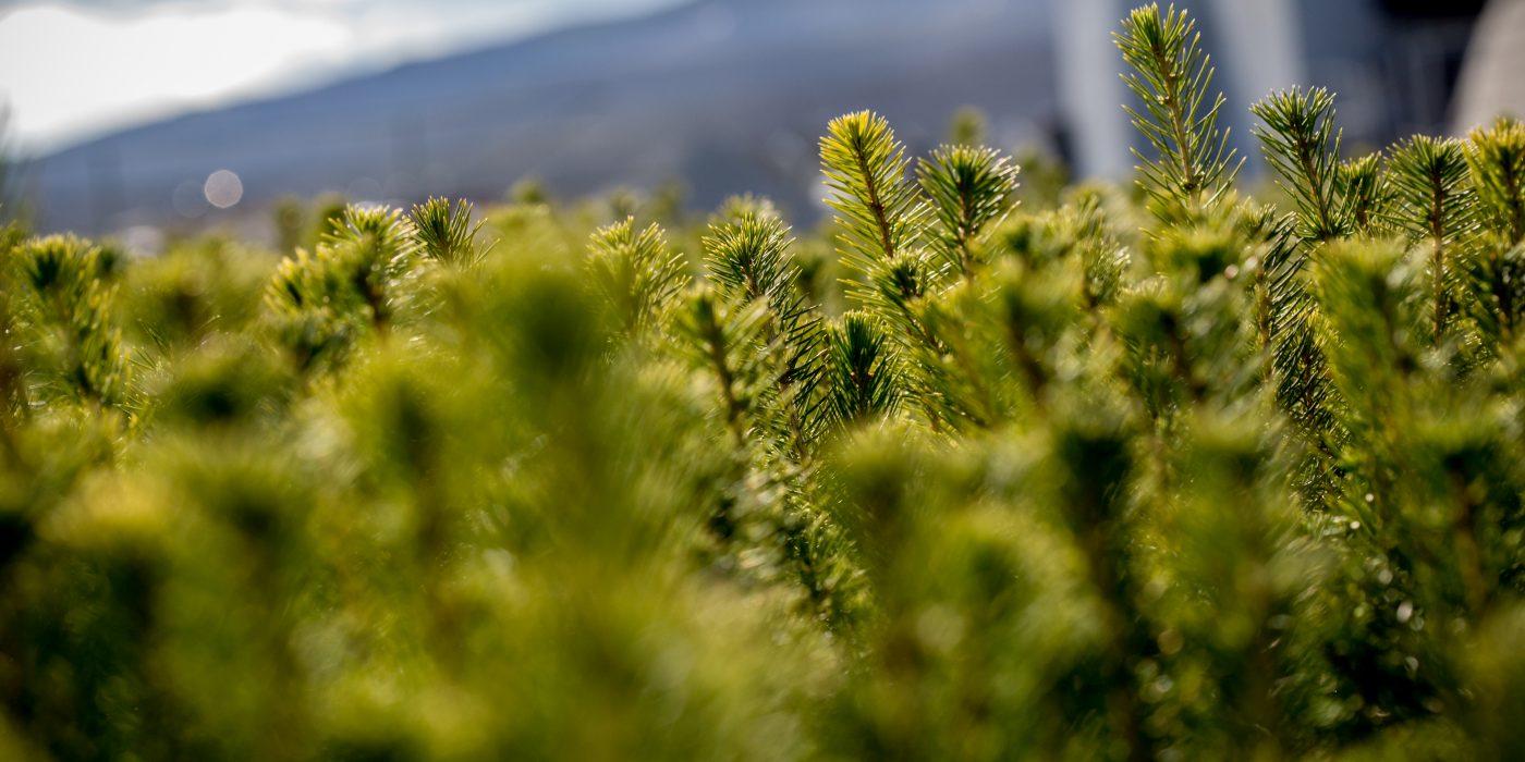 Bilde av skogplanter